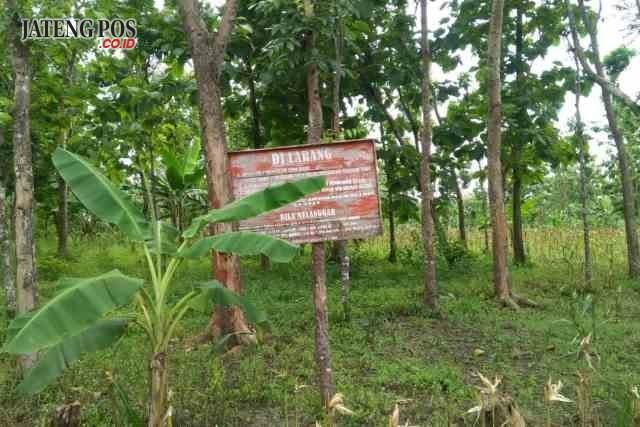 TIDAK BOLEH: Plakat larangan menanam tebu di area perhutani, KPH Tangen.
