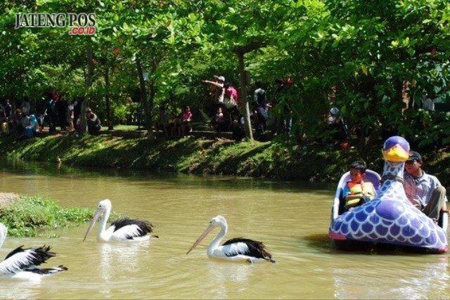 Upaya Pemkot memperbaiki kebon binatang Mangkang telah menunjukan hasil seiring dengan meningkatnya kunjungan wisatawan.