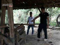 KANDANG SAPI: Korban dan warga menyisir daerah kandang dan persawahan untuk mencari sapi yang dicuri orang tersebut.