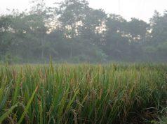 Rawan Banjir, Kementan Dorong Petani Manfaatkan AUTPRawan Banjir, Kementan Dorong Petani Manfaatkan AUTP