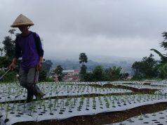 Penugasan Impor Bawang Putih Kepada Bulog Bisa Rugikan Jokowi