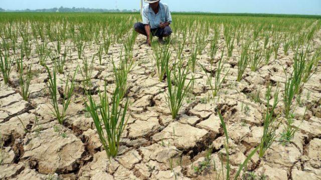 Hadapi Kemarau, Kementan Genjot Pembangunan Irigasi Pertanian